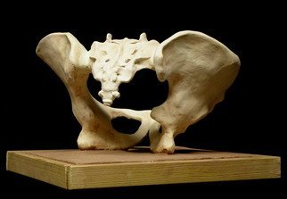 Terry Mollo; Pelvic Structure, 2010, Original Ceramics Handbuilt, 12 x 12 inches. Artwork description: 241  The word pelvis derives from the Latin meaning bowl. Study of a female pelvis and sacrum carved from a block of clay, fired stoneware. Base is terra cotta and woodframe. ...