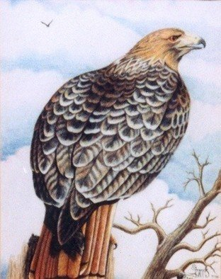 Olivia Francis; Hawkeye, 2000, Original Drawing Pencil, 16 x 20 inches. Artwork description: 241  Prisma color pencil drawing of Red- tail hawk on bristol paper. ...