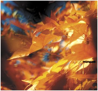 Russet Andrew; Color Of Fall, 2005, Original Photography Color, 40 x 35 inches.