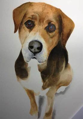 John Tooma; Study Of Sam, 2015, Original Drawing Gouache, 20 x 30 cm. Artwork description: 241 This lovely dog belongs to my friend Kim s niece, Sam passed away and this piece is in memory of this gentle creature. ...