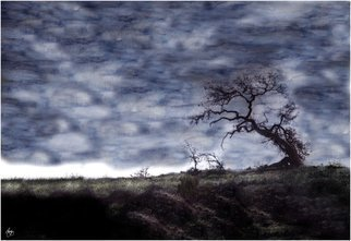 Wayne King; California, 2008, Original Photography Mixed Media, 20 x 30 inches. Artwork description: 241  California Oak in a painted sky. Moody and evocative image  ...