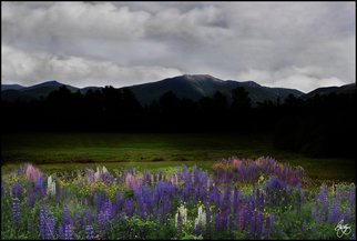 Wayne King; Dusk On The Franconia Ran..., 2012, Original Photography Color, 20 x 13.5 inches. Artwork description: 241  Dusk on the Franconia Range in the White Mountains of New HampshireLupine field in Sugar Hill, NH with the Franconia Ridge in the background. ...