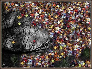 Wayne King; Pollacks Pool, 2014, Original Photography Color, 24 x 18.5 inches. Artwork description: 241  Montage of images depicting a pool and silhouette with maple leaves around the edges. / pollack, jackson, pool, foliage, leaves, leaf, fall, autumn, water, Decorative Art, Fine Art, color. ...