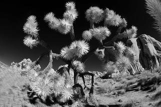 Wayne Quilliam; Desert, 2012, Original Artistic Book, 30 x 20 inches. Artwork description: 241  Australian Aboriginal photographic art inspired by the landscape of the traditional owners in Joshua Tree ...