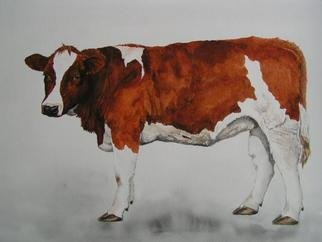 Pim Van Der Wel; Young Cow, 2004, Original Watercolor, 54 x 44 cm. Artwork description: 241 Cows are eveywhere in Holland, so I must portrait them. The longer I paint cows the more I like them. They appear to be shy, but are very curious and sometimes quite bold. Their behavior reminds me of my dog....