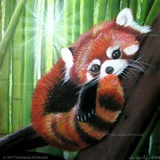Michaeline Mcdonald; red panda, 2016, Original Pastel, 12 x 12 inches. Artwork description: 241 Original pastel painting of a cute little red panda in a bamboo tree with sun filtering through the trees behind him. ...