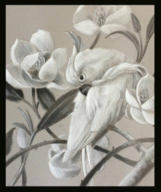 Marsha Bowers; Parrot With Magnolia Sketch, 2017, Original Drawing Graphite, 9.4 x 11 inches. Artwork description: 241 Sketch on tone paper- Bird art, sketch, graphite sketch, magnolias...
