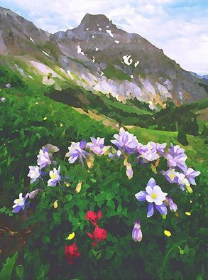 Steve Tohari; Columbine 1, 2018, Original Photography Color, 16 x 20 inches. Artwork description: 241 Columbine, San Juan Mountains above Ouray, Colorado. Columbine, Colorado, Ouray, San Juan Mountains, wildflowers, Yankee Boy Basin...