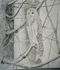 Artist: Michael Garr, Artwork Title: Barred Owl In January, 2015-07-30. Drawing Ink, Birds, $184
