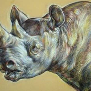 Austen Pinkerton, Rhino Head, Animals,  Request Price