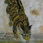 clouded leopard By Althea E Jenkins