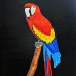 macaw By Althea E Jenkins