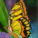 malachite butterfly By Althea E Jenkins
