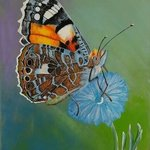 painted lady butterfly By Althea E Jenkins
