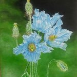 three blue flowers By Althea E Jenkins