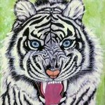 white tiger with blue eyes By Althea E Jenkins
