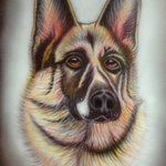 Alsatian after Helen Backhouse By Can Yucel