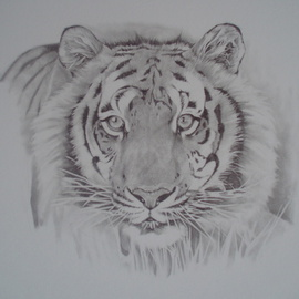 Alex Mcknight Artwork Tiger, 2009 Pencil Drawing,