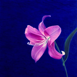 Artur Pashkov: 'night lily', 2019 Oil Painting, Floral. Artist Description: Original oil painting on canvas using high quality oils. I use objects from real life and use them as basis for my art to make a painting. ...