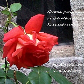 red rose in Gerona old Kabalah centre