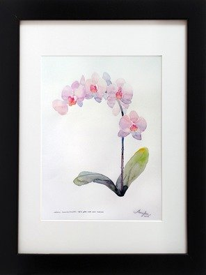 Amyka Densinkasem: 'pink moth orchid', 2015 Watercolor, Floral. Artist Description: Watercolour painting of Pink Moth orchid ...