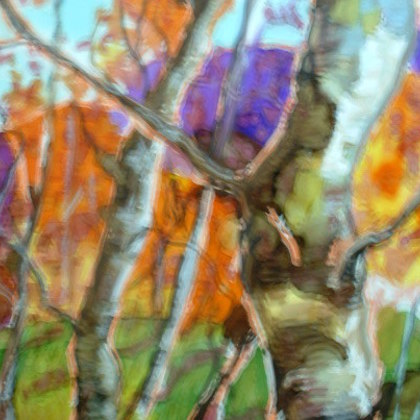 , Old  Birch, Nature, $130