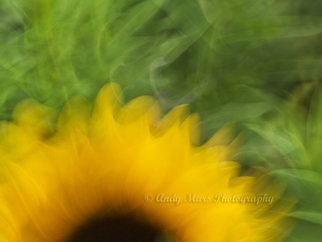 Andy Mars: 'Sunflower In Motion', 2009 Color Photograph, People. Artist Description:  Sunflower, 'slow shutter speed' , Riverside Park, NYC   ...