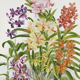 Alis Orchids By Anji Worton