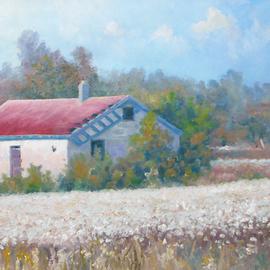 Montmorencie Cotton Field