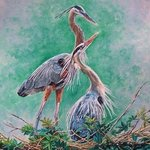 Blue Herons Nesting, Judith Smith Wilson