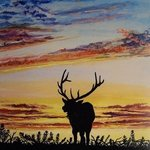 Bull Elk in Sunset By Judith Smith Wilson