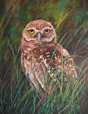 Artist: Judith Smith Wilson - Title: Cape Coral Burrowing Owl - Medium: Watercolor - Year: 2004