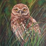 Cape Coral Burrowing Owl By Judith Smith Wilson