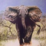 Charging Elephant By Judith Smith Wilson