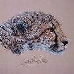 Duma The Cheetah, Judith Smith Wilson