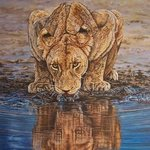 Lioness at Waterhole By Judith Smith Wilson