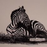 Reflections of Zebra By Judith Smith Wilson