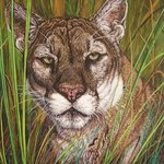 The Florida Panther By Judith Smith Wilson