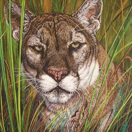 The Florida Panther, Judith Smith Wilson