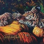 The Pumpkin Eater By Judith Smith Wilson