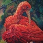 The Red Ibis By Judith Smith Wilson