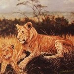 The Young Lions By Judith Smith Wilson