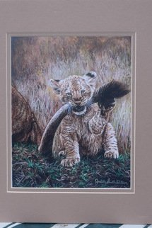 Judith Smith Wilson: 'tail hook', 2017 Watercolor, Wildlife. Baby lion with mom s tail in it s mouth, matted ready to be framed. ...