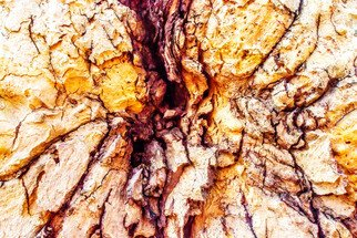 Mariano Von Plocki: 'mother wound', 2013 Color Photograph, Nature. Artist Description: tree, nature, wood, forest, forms, elements, earth, mother earth...