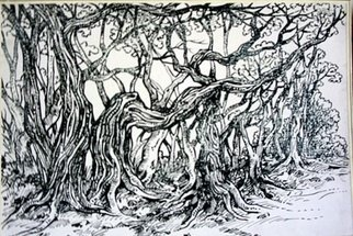 Ashok Revankar Artwork Tree scape, 2009 Pen Drawing, Landscape