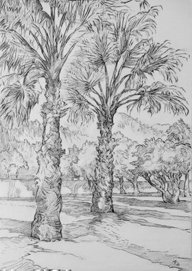 Austen Pinkerton: 'Gardens at the Keskin', 2016 Graphite Drawing, Landscape. Artist Description:       gardens trees palms hotel ...