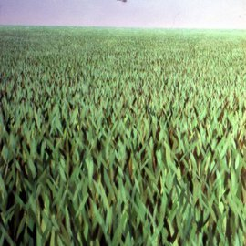 Austen Pinkerton Artwork Helicopter in field of Grass, 1975 Acrylic Painting, Landscape