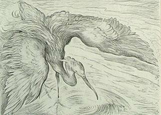 Animals Pencil Drawing by Austen Pinkerton titled: Heron, created in 2005