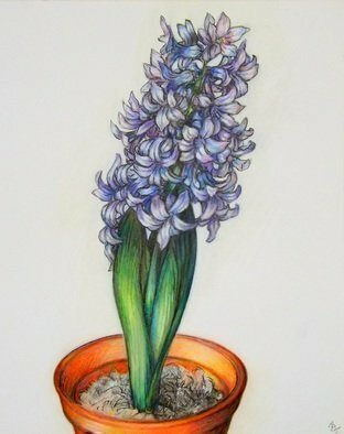 Austen Pinkerton Artwork Hyacinth, 2015 Crayon Drawing, Nature