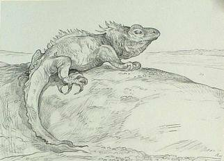 Animals Pencil Drawing by Austen Pinkerton titled: Lizard, created in 2005